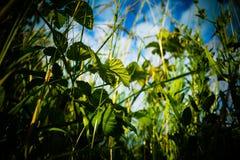 Взгляд от травы Стоковые Фотографии RF