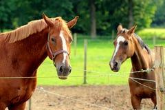 Взгляд лошади Стоковое Изображение RF