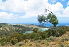 Взгляд оливкового дерева на холме и резервуаре Стоковое фото RF