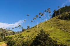 Взгляд долины Valle del Cocora Cocora в Колумбии Стоковые Изображения