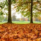 Взгляд парка в милане, во время падения иногда com крышки листьев Стоковые Изображения
