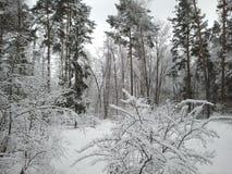 Взгляд парка зимы Стоковые Фотографии RF
