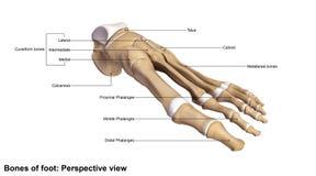 Взгляд перспективы ноги Стоковые Фотографии RF