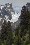 Взгляд покрытых снег гор через высокорослый сосновый лес Стоковые Фотографии RF