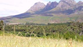 Взгляд полей и гор в южно-африканском ландшафте видеоматериал