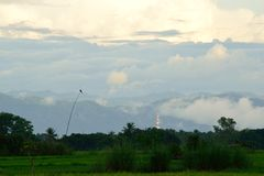 Взгляд полей риса Стоковые Фотографии RF