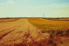 Взгляд полей хлопьев и солнцецветов Стоковое Фото