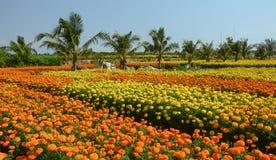 Взгляд полей цветка в перепаде Меконга, южного Вьетнама Стоковые Изображения