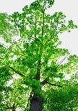 Взгляд под деревом Стоковое Фото