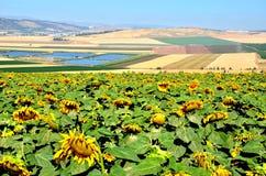 Долина Израиль Jezrael Стоковые Фото