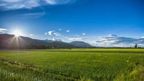 Взгляд поля риса Стоковые Фото
