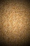 Взгляд предпосылки пшеницы от верхнего конца вверх Стоковые Изображения