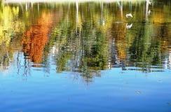 Взгляд пруда в парке стоковое фото