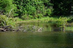 Взгляд пруда стоковое фото rf