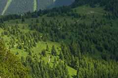 Взгляд птицы леса Стоковые Фотографии RF