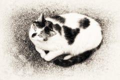 Взгляд птицы кота лежа вниз на утесе Стоковое Изображение