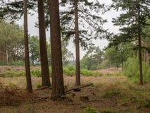 Взгляд пустоши от леса Стоковое фото RF
