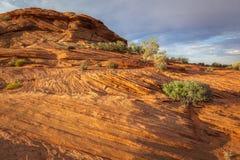 Взгляд пустыни, США Стоковая Фотография