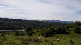 Взгляд района озера Стоковые Изображения