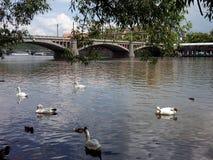 Взгляд реки Влтавы Стоковая Фотография