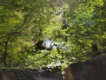 Взгляд реки от старого каменного моста Стоковая Фотография RF
