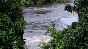 Взгляд реки через деревья Джунгли, Африка акции видеоматериалы