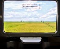 Взгляд риса изнутри окна поезда Стоковая Фотография