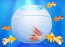 Взгляд 5 рыбок в аквариуме Стоковые Изображения RF