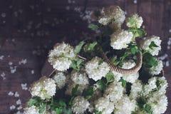 Взгляд сверху белых цветков в плетеной сумке Стоковое фото RF