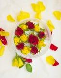 Взгляд сверху бутонов роз Стоковые Изображения RF