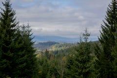взгляд сверху горы Темные ые-зелен наклоны и холмы Карпатов Славный взгляд гор над красивейшими облаками птиц цветы раньше летают стоковая фотография