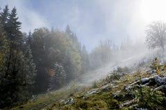 взгляд сверху горы Темные ые-зелен наклоны и холмы Карпатов Славный взгляд гор над красивейшими облаками птиц цветы раньше летают стоковые изображения