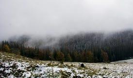 взгляд сверху горы Темные ые-зелен наклоны и холмы Карпатов Славный взгляд гор над красивейшими облаками птиц цветы раньше летают стоковое изображение
