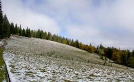 взгляд сверху горы Темные ые-зелен наклоны и холмы Карпатов Славный взгляд гор над красивейшими облаками птиц цветы раньше летают стоковые изображения rf