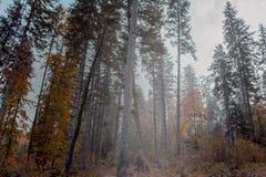 взгляд сверху горы Темные ые-зелен наклоны и холмы Карпатов Славный взгляд гор над красивейшими облаками птиц цветы раньше летают стоковое фото