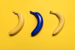 Взгляд сверху голубых и желтых бананов изолированных на желтом цвете Стоковые Фотографии RF
