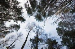 Взгляд сверху деревьев Стоковая Фотография RF