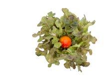 Взгляд сверху деревянной чашки зеленых дуба и томата на белом backgrou Стоковые Фото