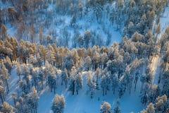 Взгляд сверху леса зимы стоковые изображения