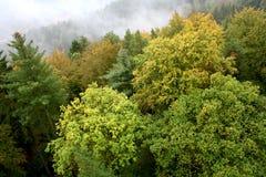 Взгляд сверху леса осени Стоковые Фото