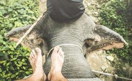 Взгляд сверху животного катания человека босоногого на слоне trekking Стоковое Фото