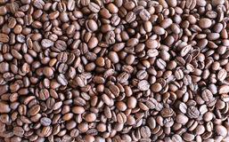 Взгляд сверху зажаренной в духовке предпосылки кофейного зерна в естественном свете Стоковое Изображение