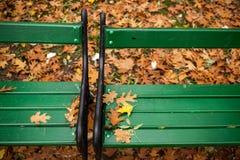 Взгляд сверху листьев дуба на скамейке в парке Стоковые Изображения RF