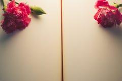 Взгляд сверху и конец вверх отображают на красивой яркой розовой гвоздике o Стоковое фото RF