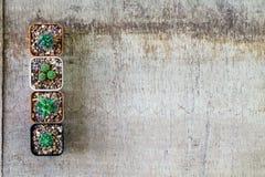 Взгляд сверху кактуса в баках на grungy деревянной предпосылке с экземпляром Стоковые Фото