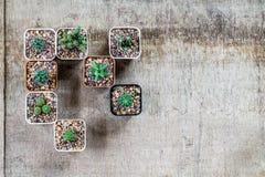 Взгляд сверху кактуса в баках на grungy деревянной предпосылке с экземпляром Стоковое Фото