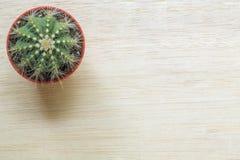 Взгляд сверху кактуса Стоковые Изображения