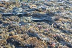 Взгляд сверху кораллового рифа коралловый риф в текстуре Красного Моря Стоковое Изображение RF