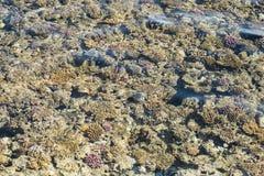Взгляд сверху кораллового рифа коралловый риф в текстуре Красного Моря Стоковые Изображения