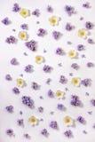Взгляд сверху красивой картины цветков сирени и ветреницы, плоского Ла Стоковая Фотография RF